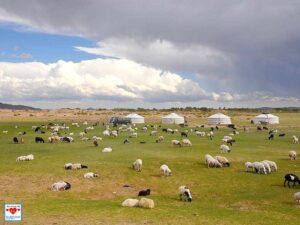 Ursprüngliches Leben der Nomaden in der asiatischen Steppe. Schafe sichern das Überleben der Menschen. (Foto: Abert/abenteuerosten.de)