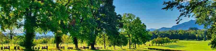 Baumpflanz-Aktionen sind für Caravaner mit wenigen Klicks durchführbar. Mitmachen schadet nix, oder?(Foto: Antranias; pixabay.com)