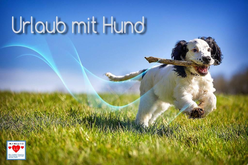 So klappt der Urlaub mit Hund. Tipps von We love C. (Foto: DaveFrancis; pixabay.com)