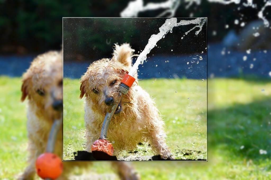 Hunde machen viel Spaß und toben gerne herum. (Foto: sevenpixx; pixabay.com)