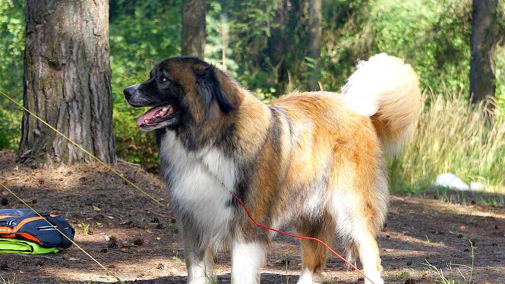 Gerade bei Hunden mit dichtem Fell immer für ausreichende Kühlung sorgen. (Foto: Greenstock; pixabay.com)