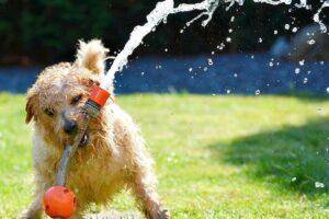 Hunde lieben Camping und das Herumtoben. Auf dem Stellplatz lassen es die Besitzer aber am Besten ruhiger angehen. (Foto: sevenpixx; pixabay.com)