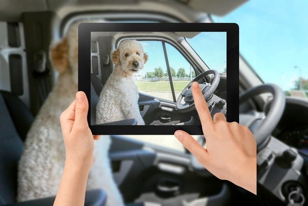 Hund am Steuer oder im Fahrerhaus? Nein, das solltet ihr besser lassen. (Foto: Sammy-Williams)